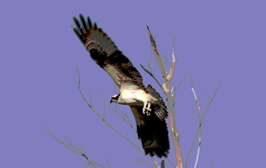 Osprey Photograph - Osprey Lift Off by Sharon McLain