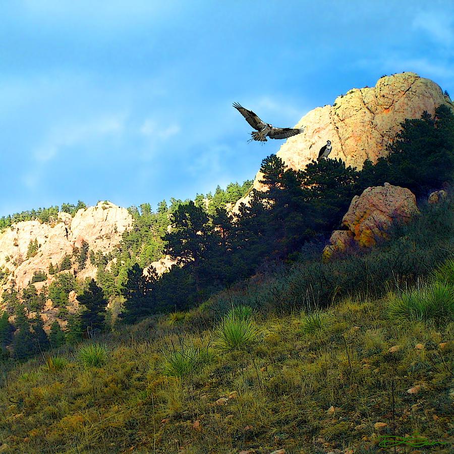 Osprey Photograph - Osprey by Ric Soulen