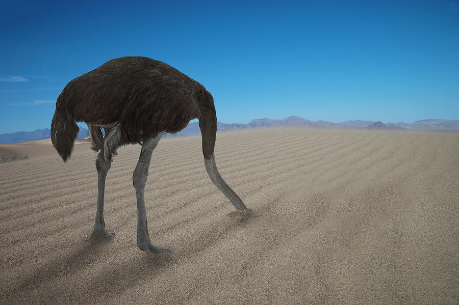 Ostrich Hiding His Head Under  Sand Photograph by Buena Vista Images