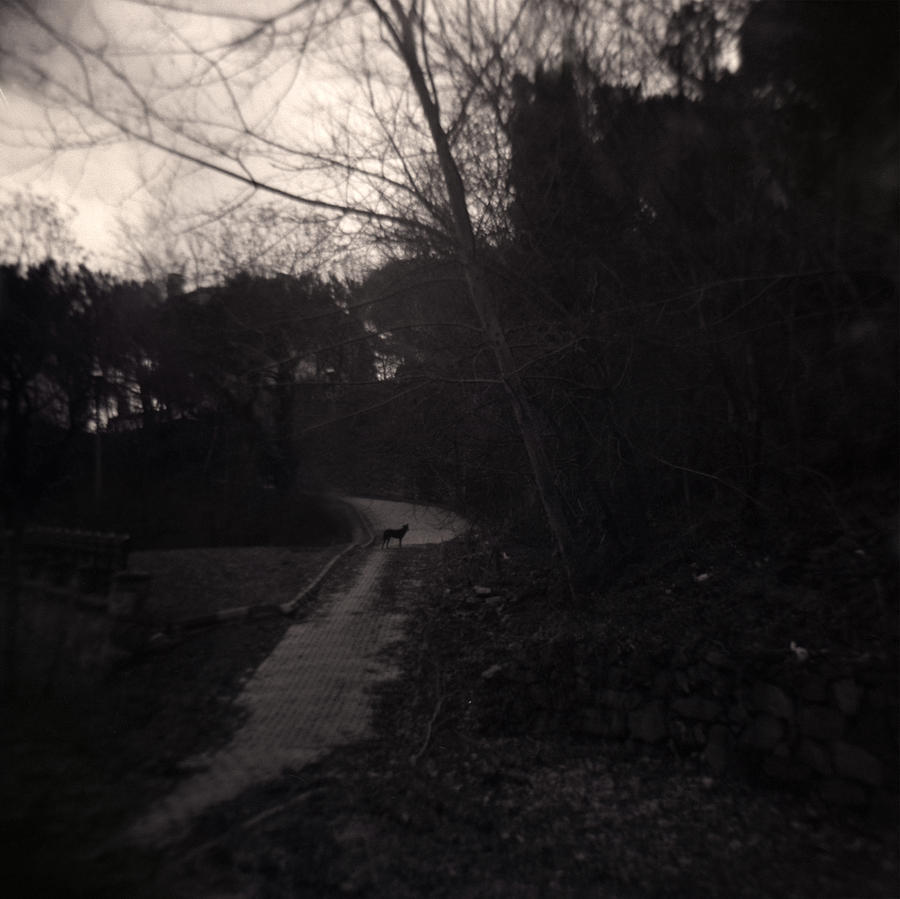 Holga Photograph - Otherwhere by Taylan Apukovska