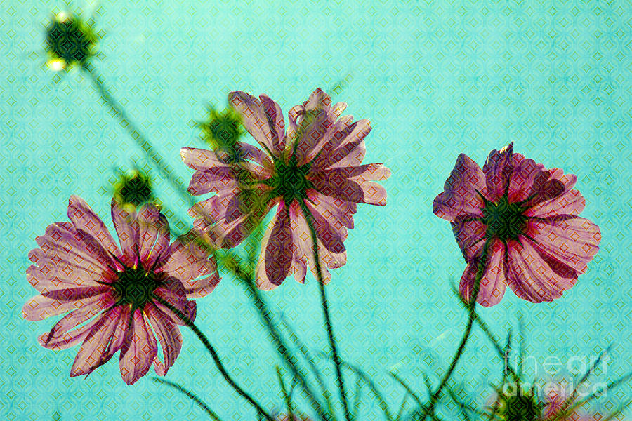 Cosmos Photograph - Otherworldly Cosmos Flowers In Pink And Green by Beverly Claire Kaiya