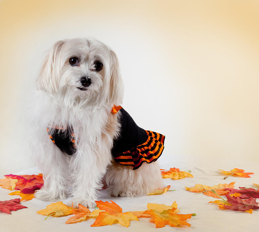 Dog Photograph - Our Best Friend by Michelle Wiarda