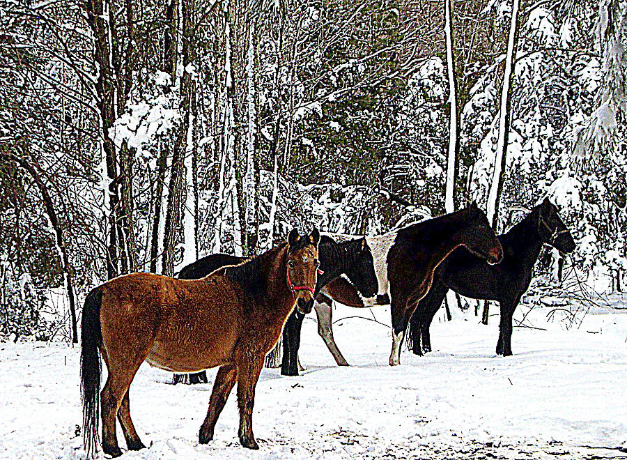 Nature Scene Painting - Our Horses by Vivian Cook