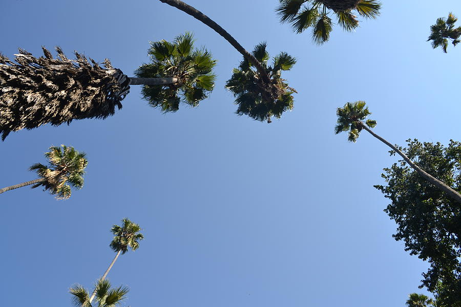 Palm Trees Photograph - Our Point Of View by Kiros Berhane