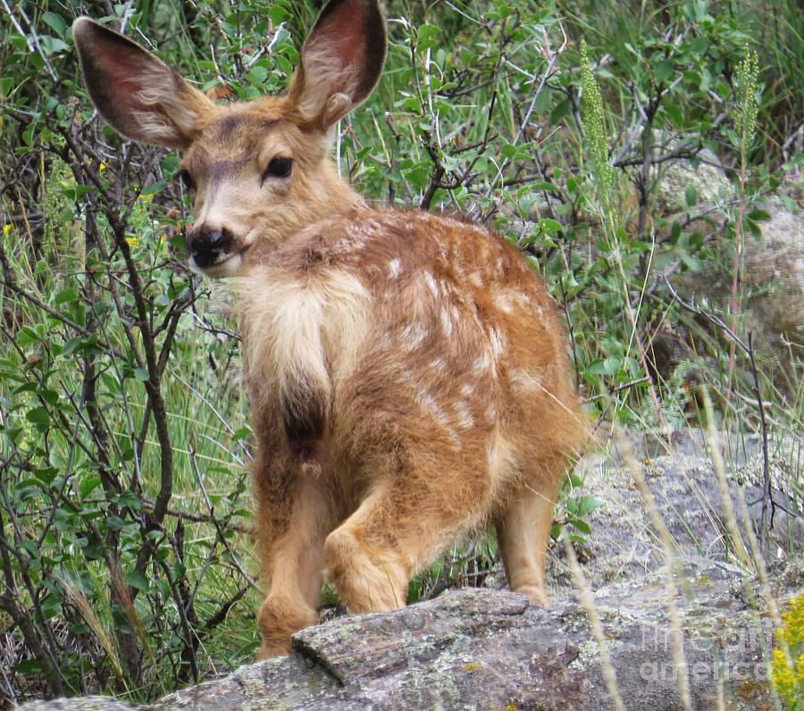 Fawn Photograph - Out Back by Harriet Peck Taylor
