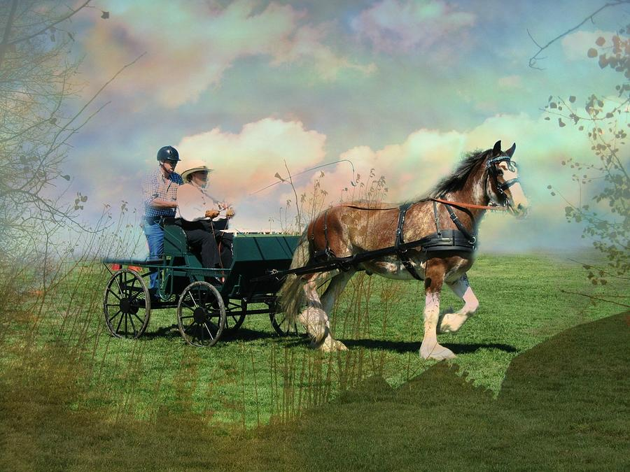 Horse Photograph - Out For A Trot by Shirley Sirois