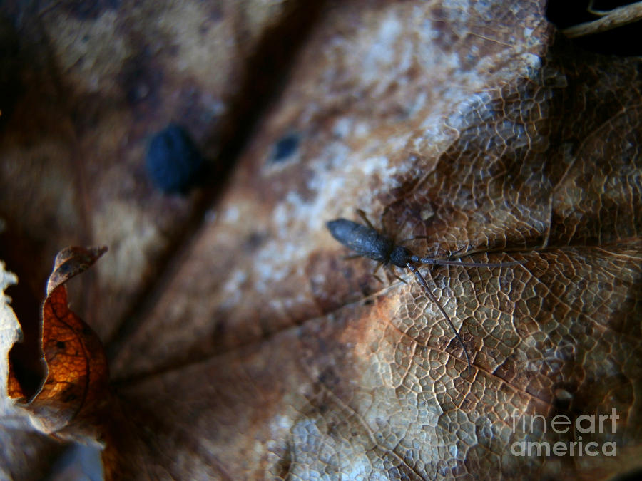 Macro Photography Photograph - Out From The Blur by Steven Valkenberg