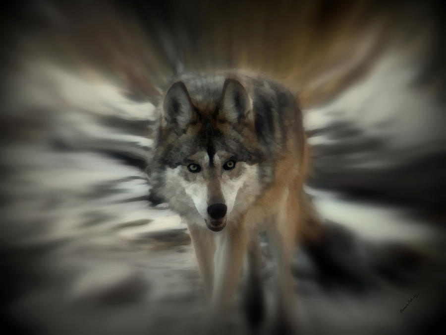 Wolf Photograph - Out Of Nowhere 2 by Ernie Echols