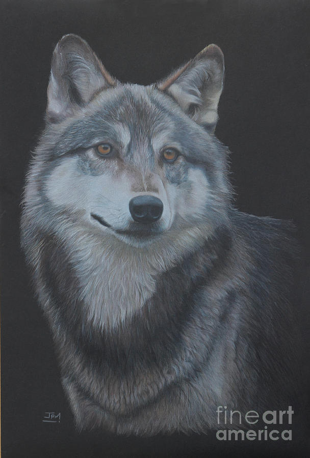 Wolf Drawing - Out Of The Darkness by Jill Parry