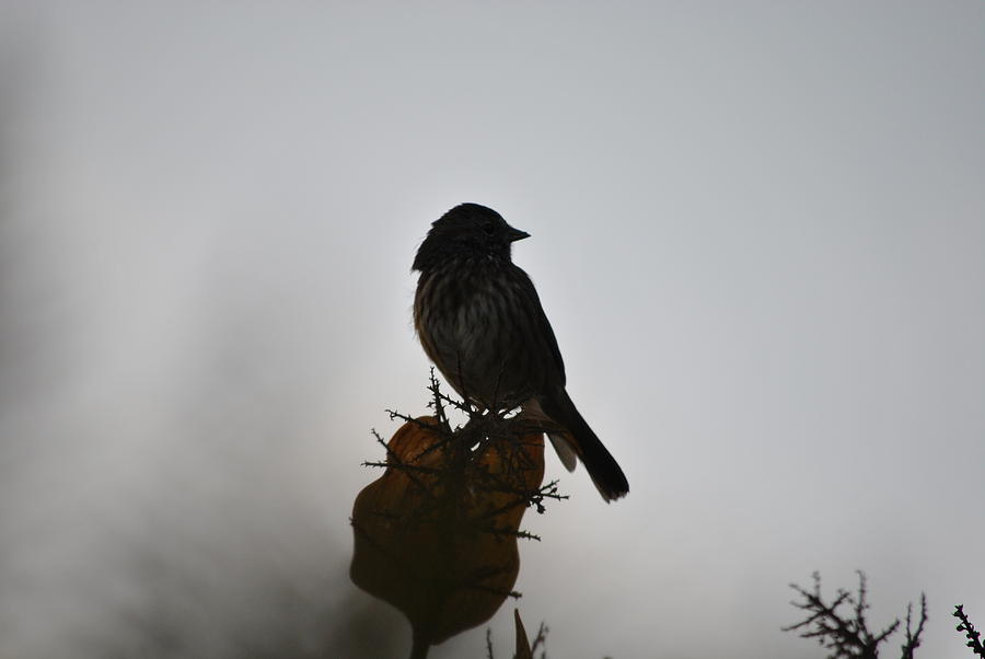 Bird Photograph - Out Of The Fog by Paulina Roybal