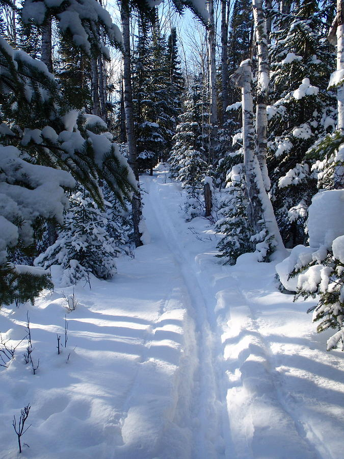 Cross Country Skiing Photograph - Out On The Trail by Sandra Updyke