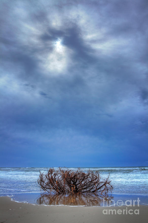 Driftwood Photograph - Outer Banks - Driftwood Bush On Beach In Surf I by Dan Carmichael