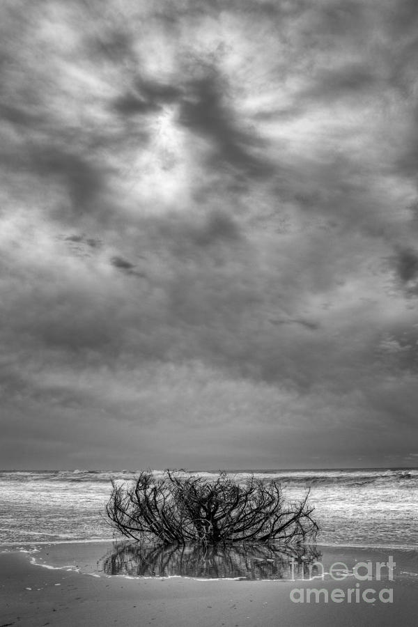 Driftwood Photograph - Outer Banks - Driftwood Bush On Beach In Surf IIi by Dan Carmichael