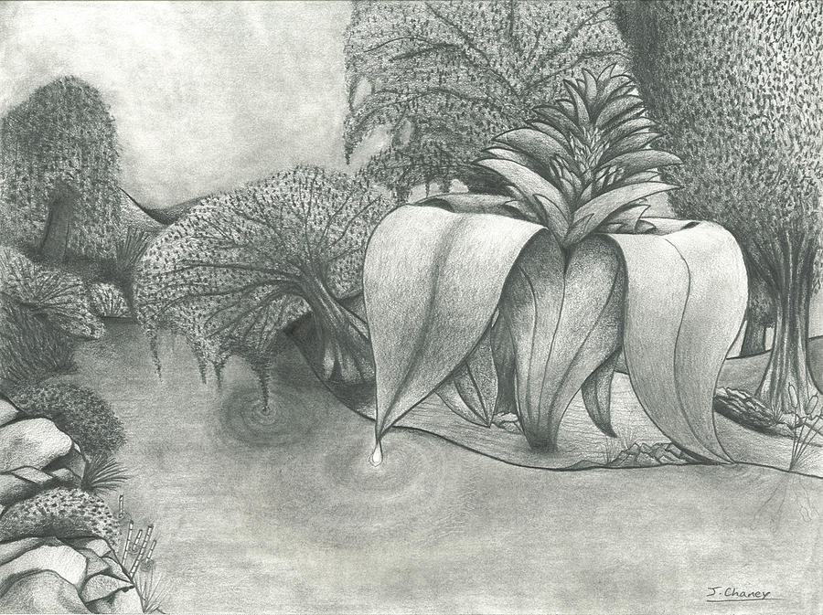 Landscape Drawing - Over Growth by James Chaney