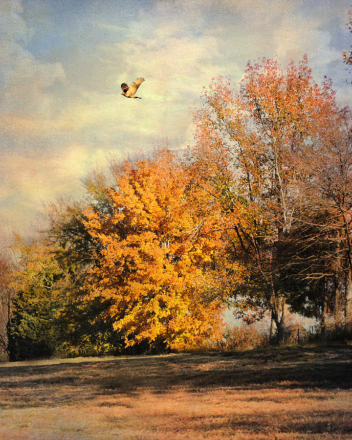 Autumn Photograph - Over The Golden Tree by Jai Johnson