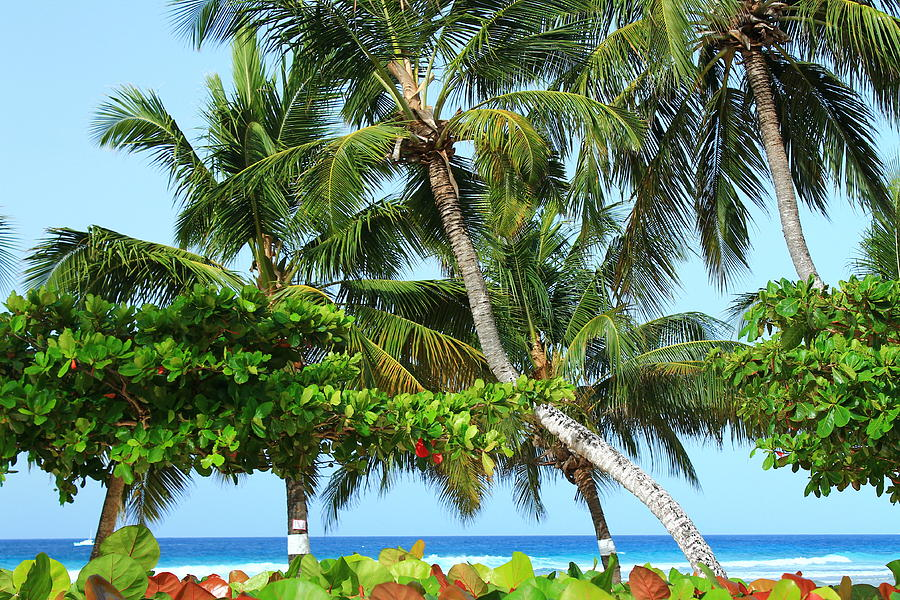 Barbados Photograph - Over The Hedges by Catie Canetti