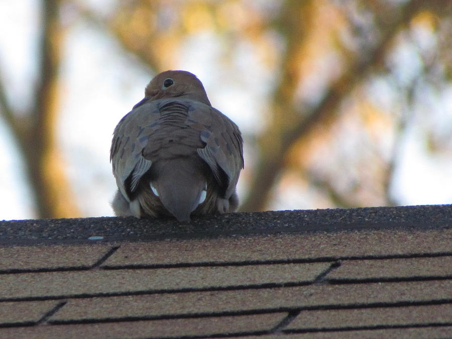 Bird Photograph - Over The Shoulder by Rickey Rivers Jr