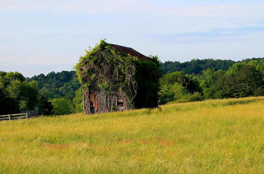 Overgrown Barn Photograph
