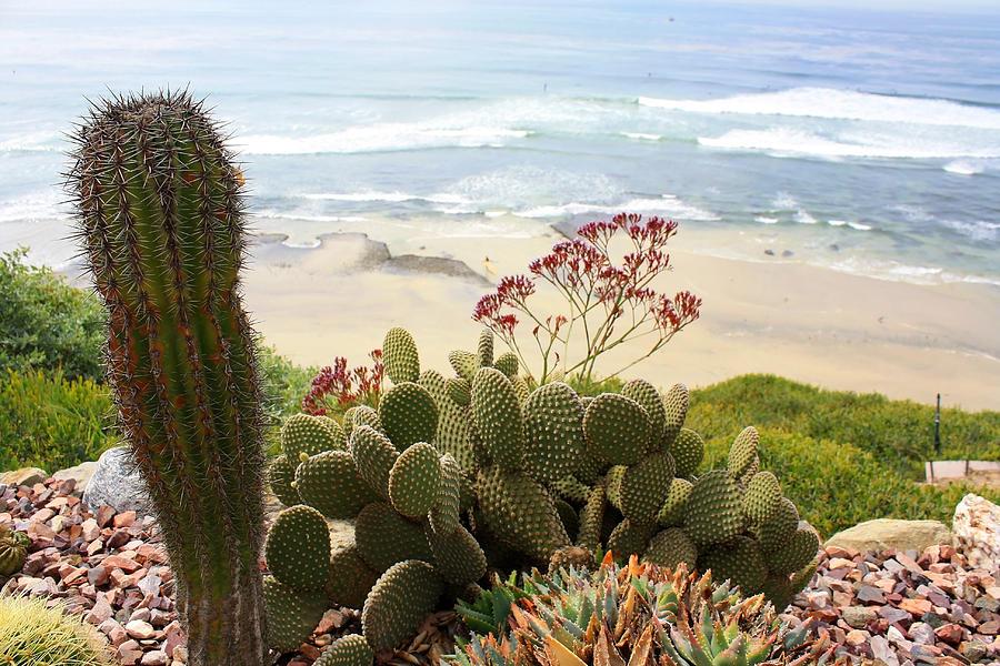 Encinitas Photograph - Overlooking San Elijo Beach by Ann Patterson