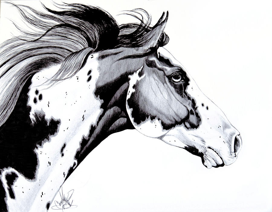 Overo Paint Horse Drawing by Cheryl Poland