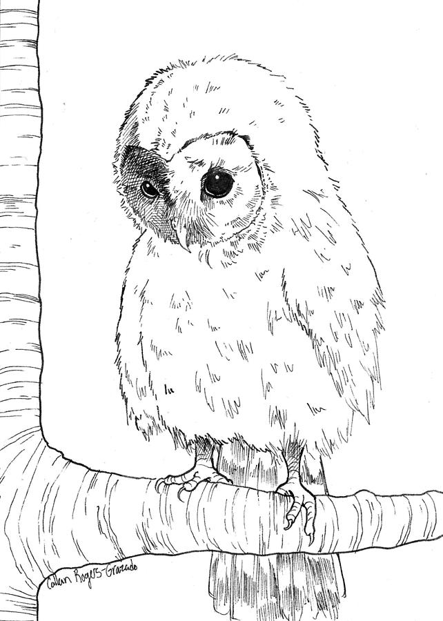 Baby Owl Drawing - Owl Baby by Callan Rogers-Grazado