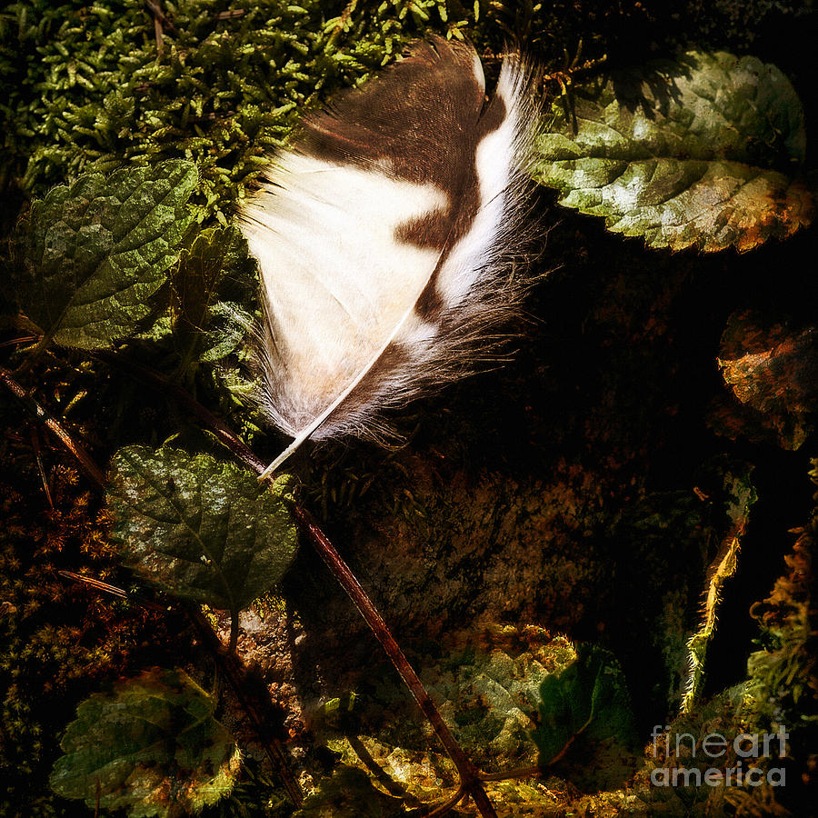 Feather Photograph - Owl Feather On Natures Canvas In Square by Lee Craig