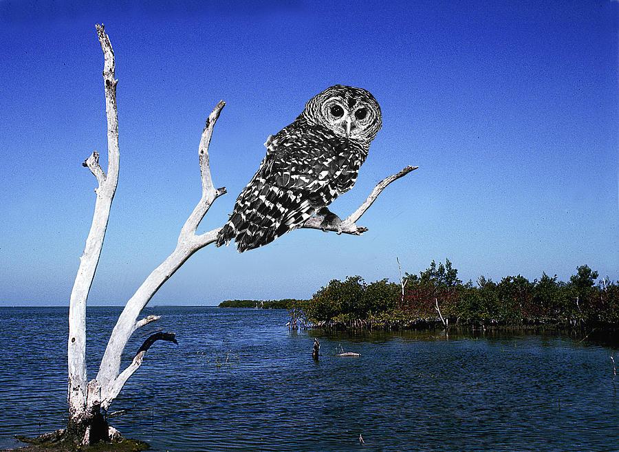 Owl Digital Art - Owl In Dead Tree by Fred Leavitt