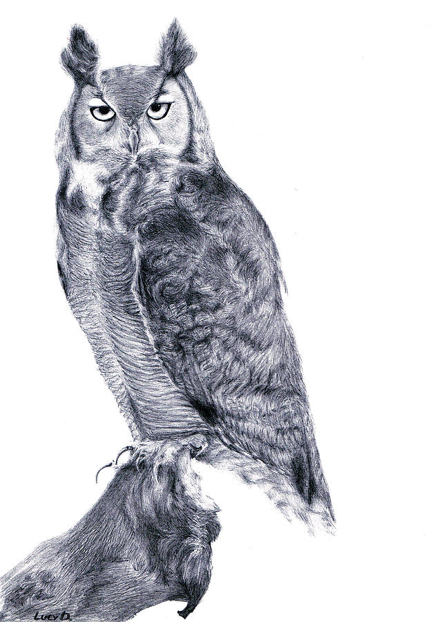 Owl Drawing - Owl by Lucy D