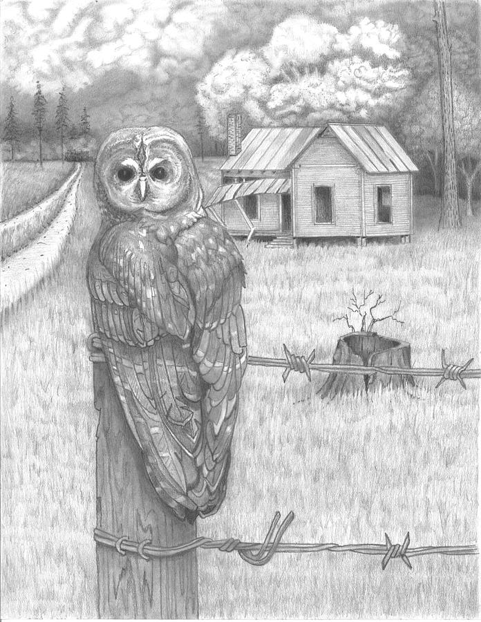 Owl on a Post by David Gallagher