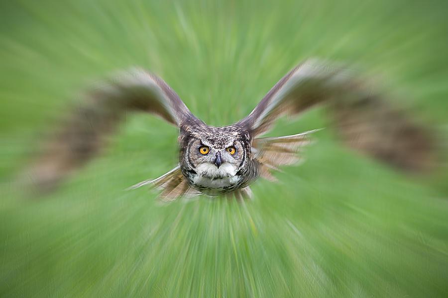 Owl on the Prowl by Glenn Springer