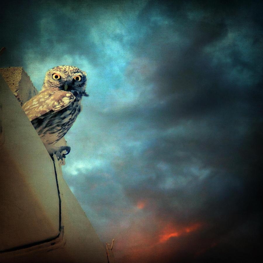 Owl Photograph - Owl by Taylan Apukovska