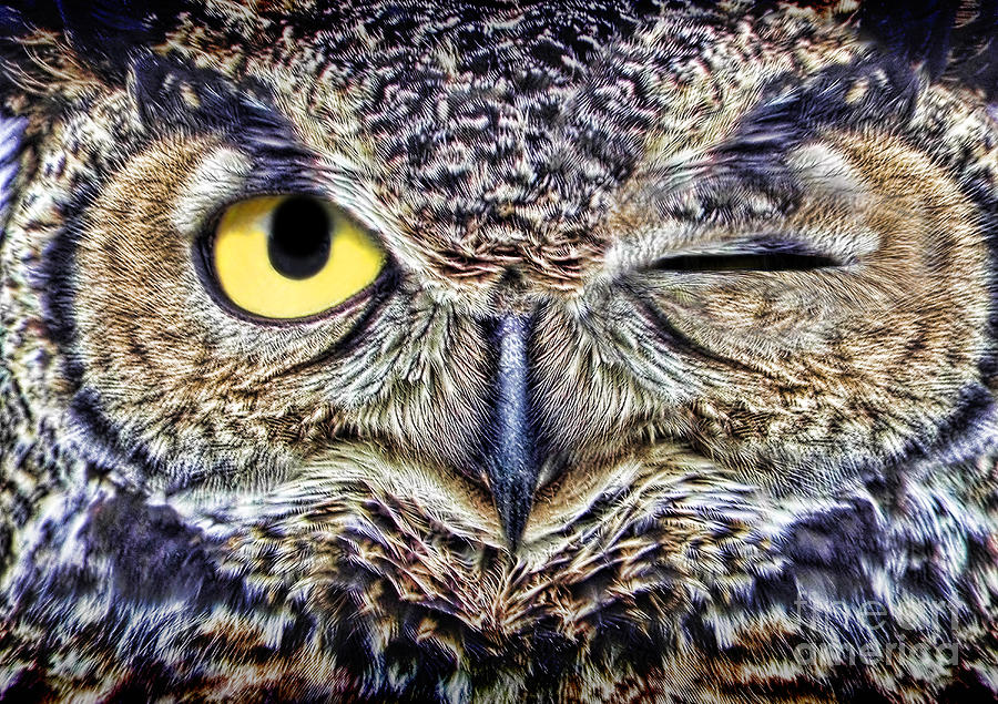 Owl Winking Photograph by Mike Agliolo