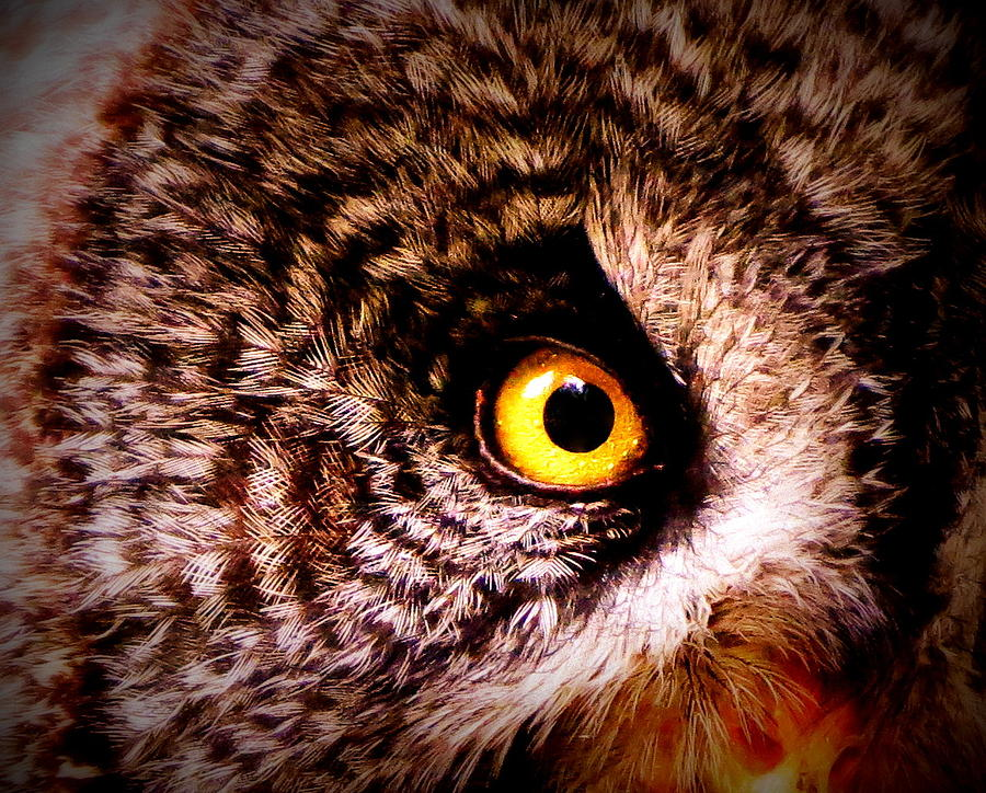 Owl Photograph - Owls Eye by Ramona Johnston