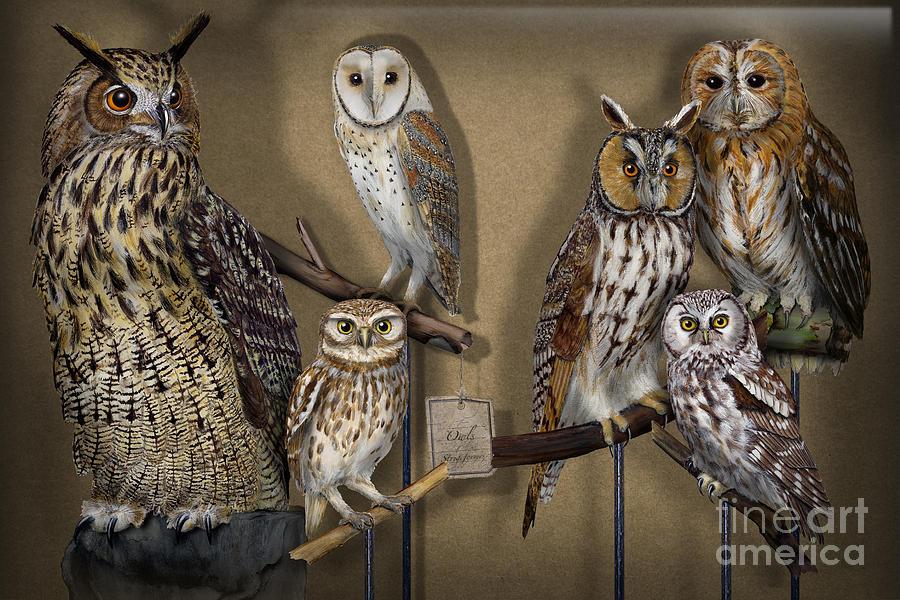 Owls - Show-case Collection - Chouettes - Hiboux - Lechuzas - Mochos - Strigiformes Strigidae Painting
