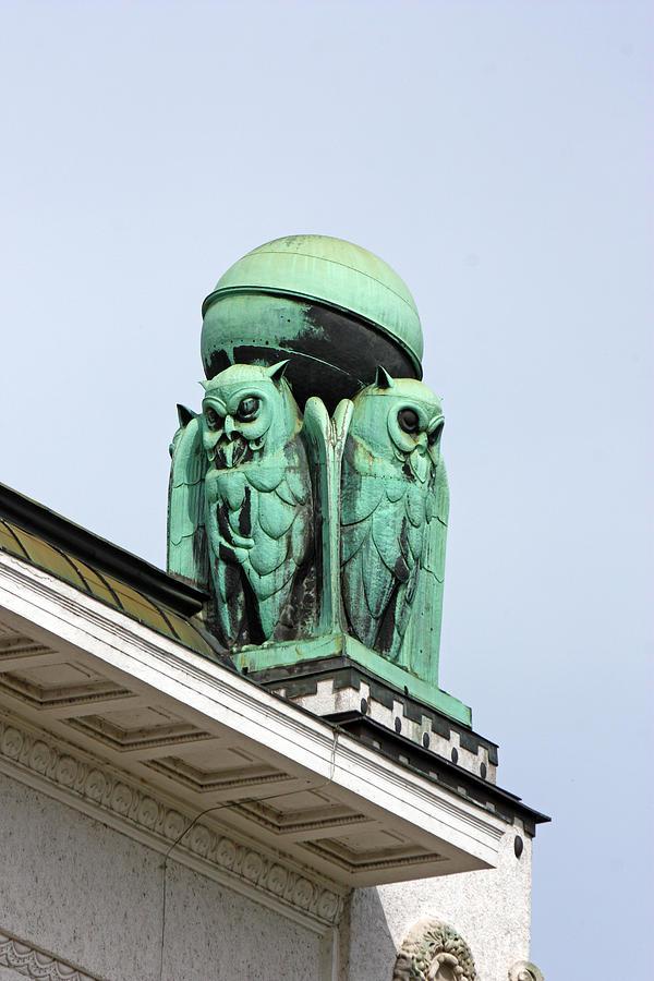Croatia Photograph - Owls Symbol Of Wisdom by Borislav Marinic