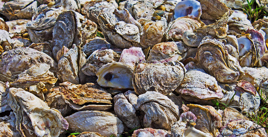 Oyster Photograph - Oysters 02 by Melissa Sherbon