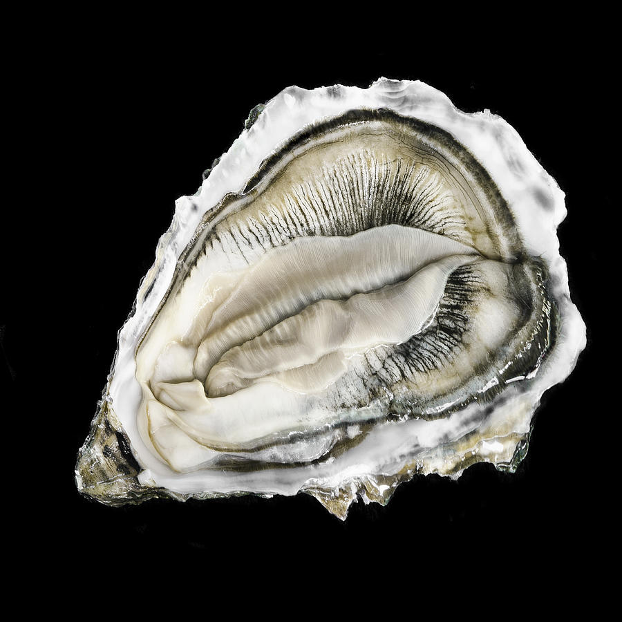 Oysters 10 004 Ver1 20x20 Photograph By Andy Frasheski