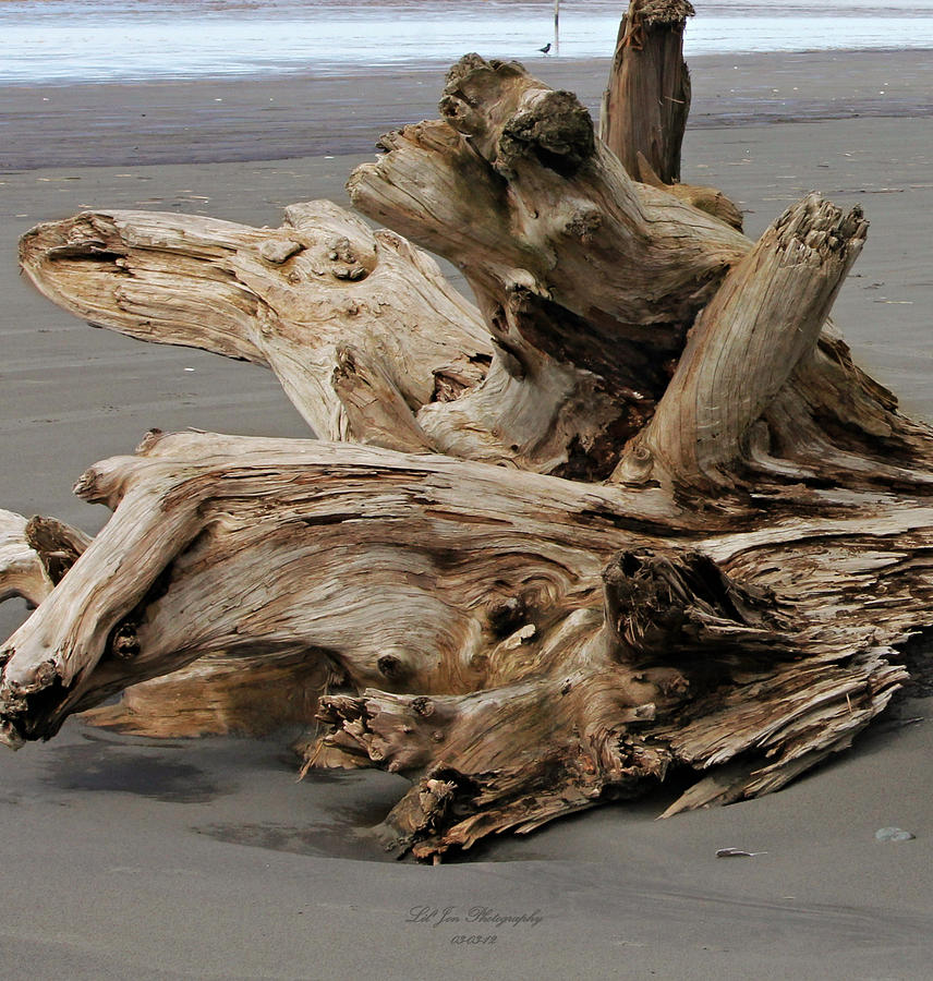 Pacific Driftwood Photograph - Pacific Driftwood II by Jeanette C Landstrom