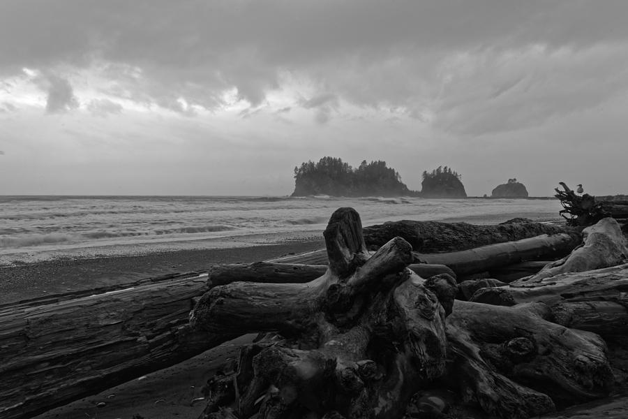Pacific Driftwood Photograph