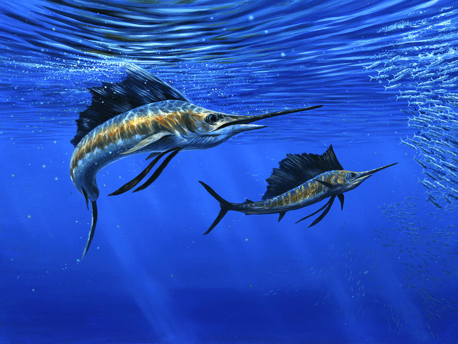 Pacific Sailfish Painting - Pacific Sailfish by Guy Crittenden