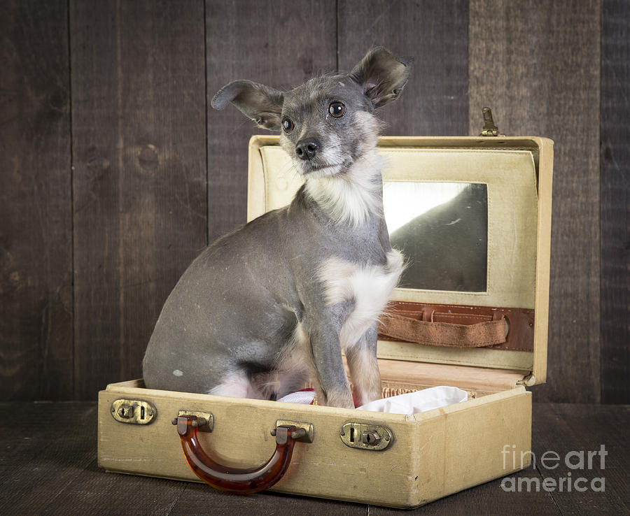Dog Photograph - Packed And Ready To Go by Edward Fielding