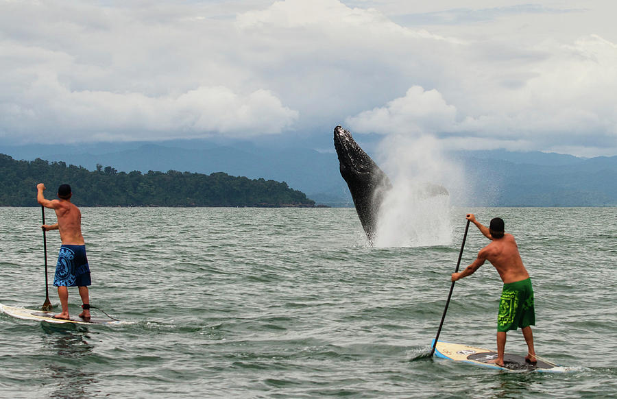 Horizontal Photograph - Paddle Boarders And Humpback Whale by Panoramic Images