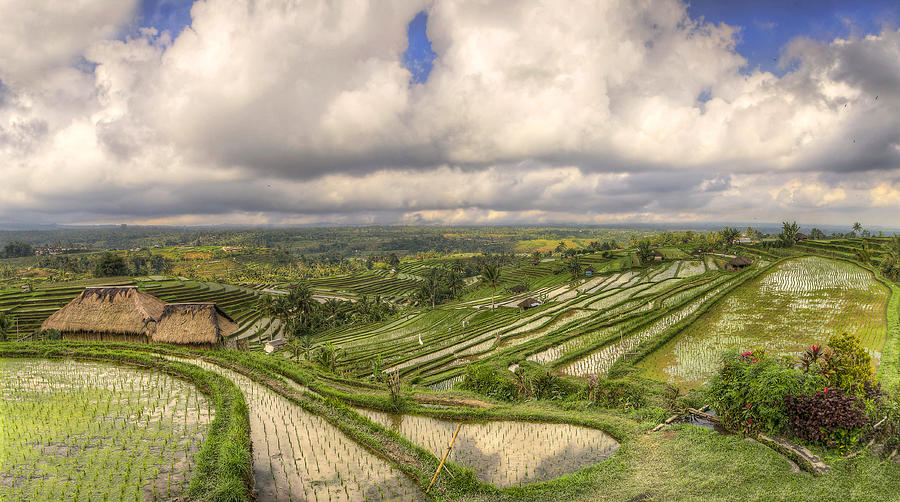 Paddy Fields Photograph by Filippo Maria Bianchi