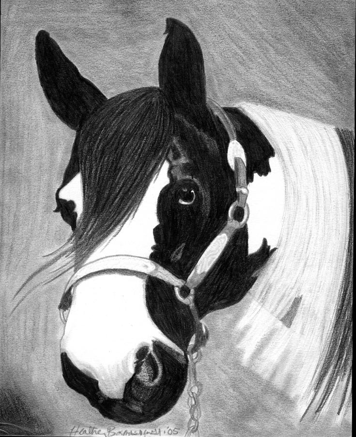 Paint Horse Drawing - Paint Horse by Olde Time  Mercantile