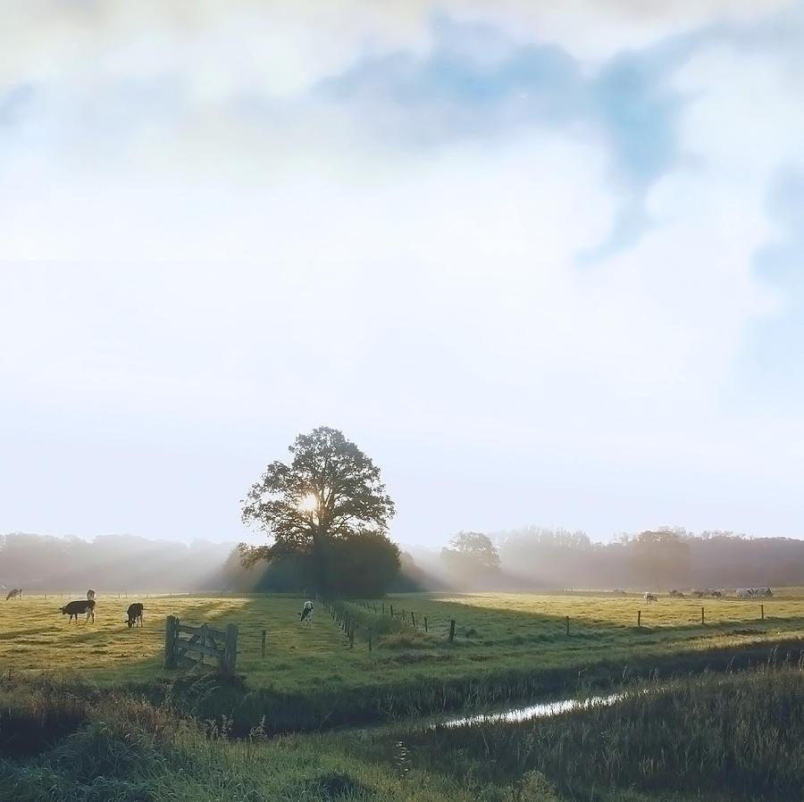 Paint My Day Photograph by Bob Van Den Berg Photography