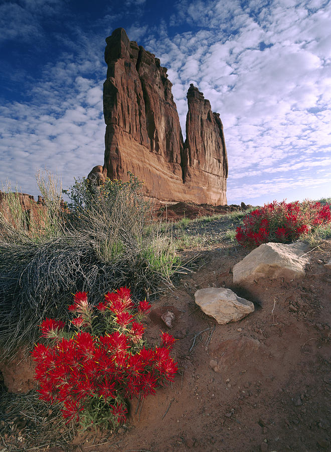 Paintbrush and  Organ Rock Photograph by Tim Fitzharris