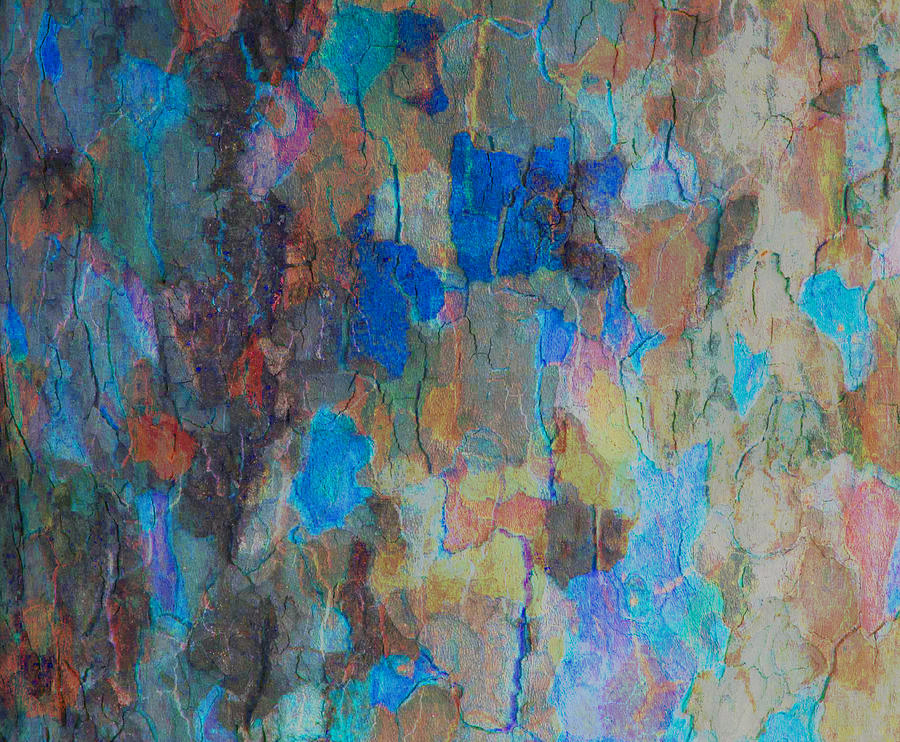 Tree Photograph - Painted Bark by Stephanie Grant