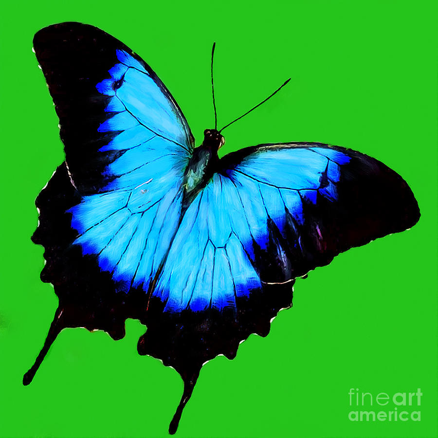 Swallowtail Butterfly Digital Art - Painted Butterfly by Bob and Nadine Johnston