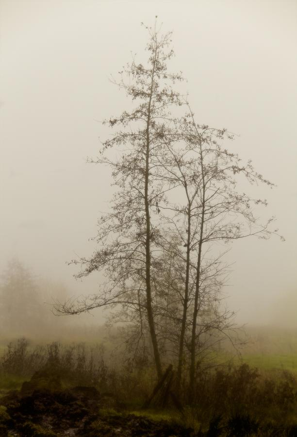 Mist Photograph - Painted By Weather by Odd Jeppesen