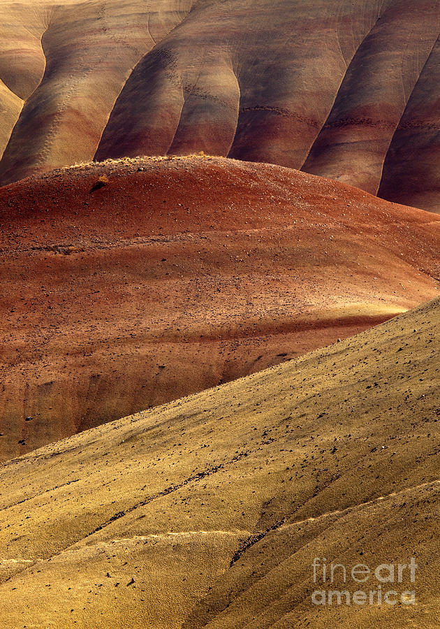 Painted Hills Photograph - Painted Curves by Mike  Dawson